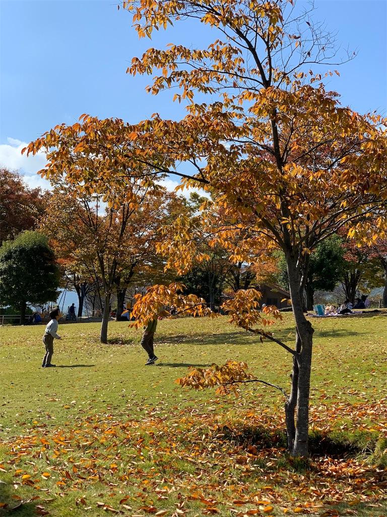 f:id:tsururiko:20201105183246j:image