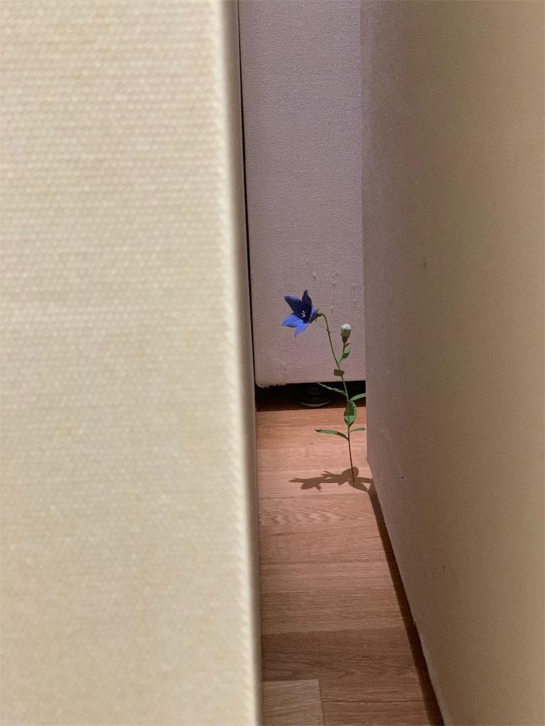 f:id:tsururiko:20210117151750j:image