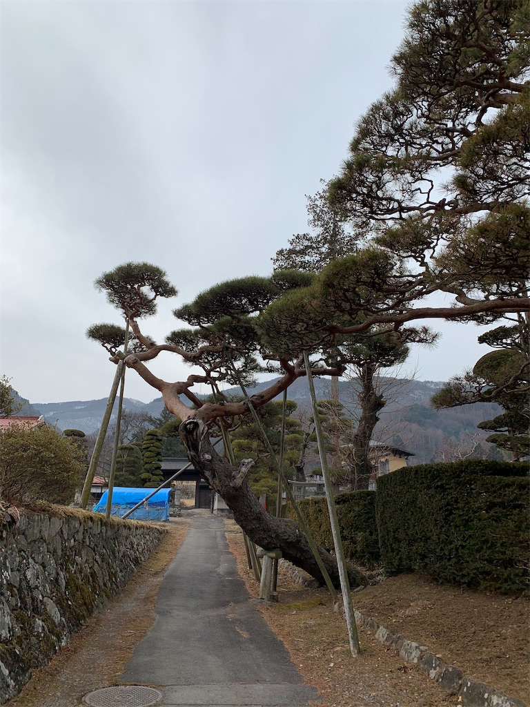 f:id:tsururiko:20210227143738j:image