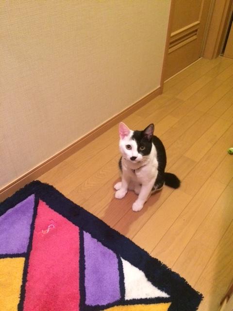 f:id:tsuruse_ah:20161201104630j:plain