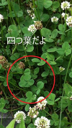 f:id:tsusa-sora:20190308145056p:plain
