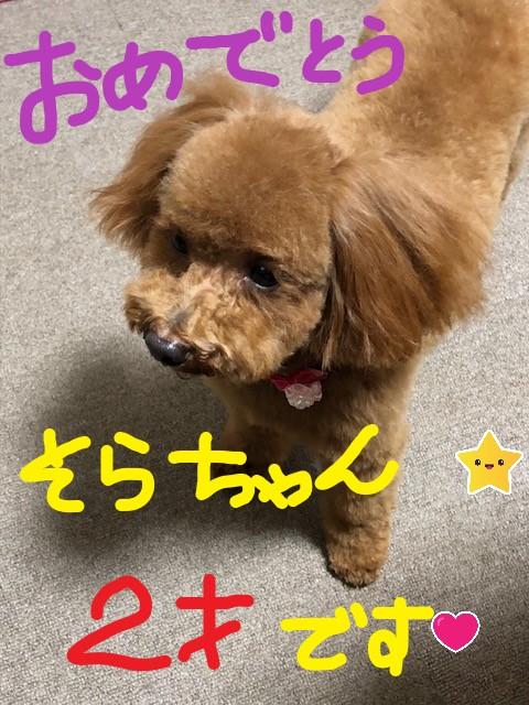 f:id:tsusa-sora:20190425105923j:plain