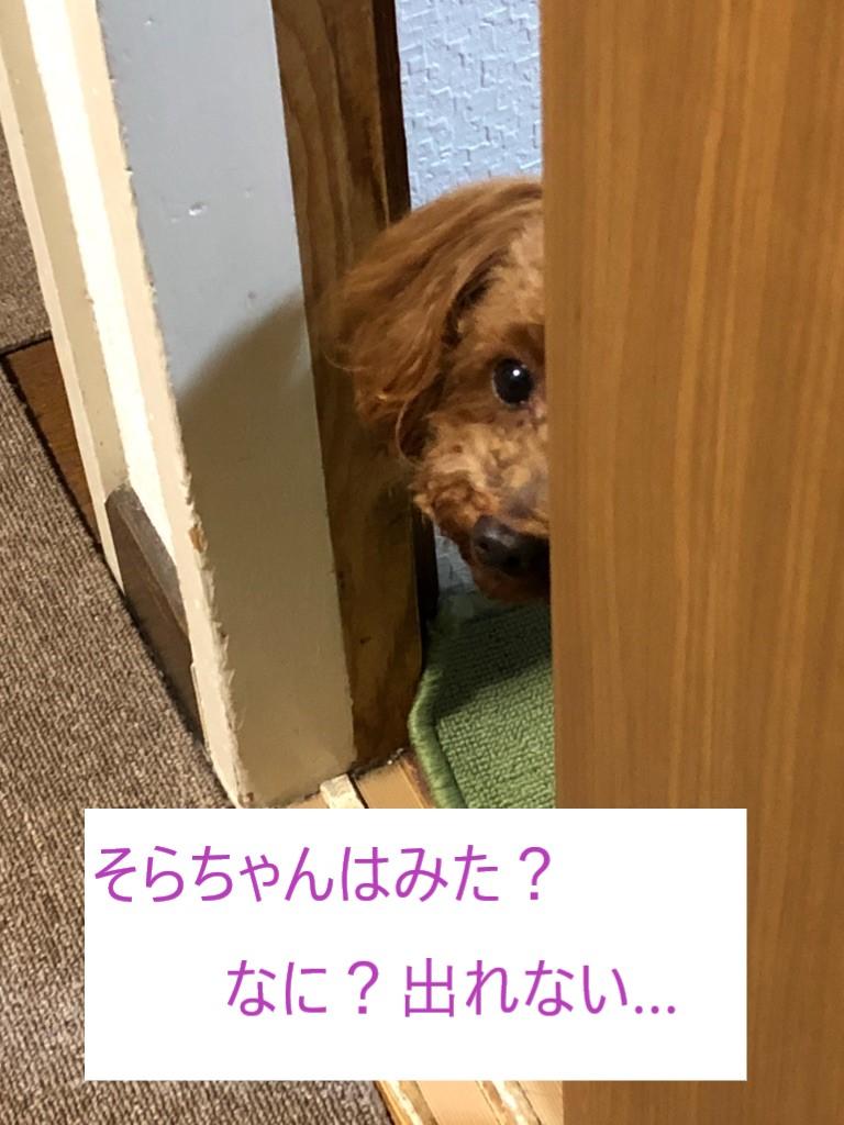 f:id:tsusa-sora:20190619130516j:plain