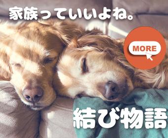 f:id:tsuyoshi1990:20170519161105j:plain