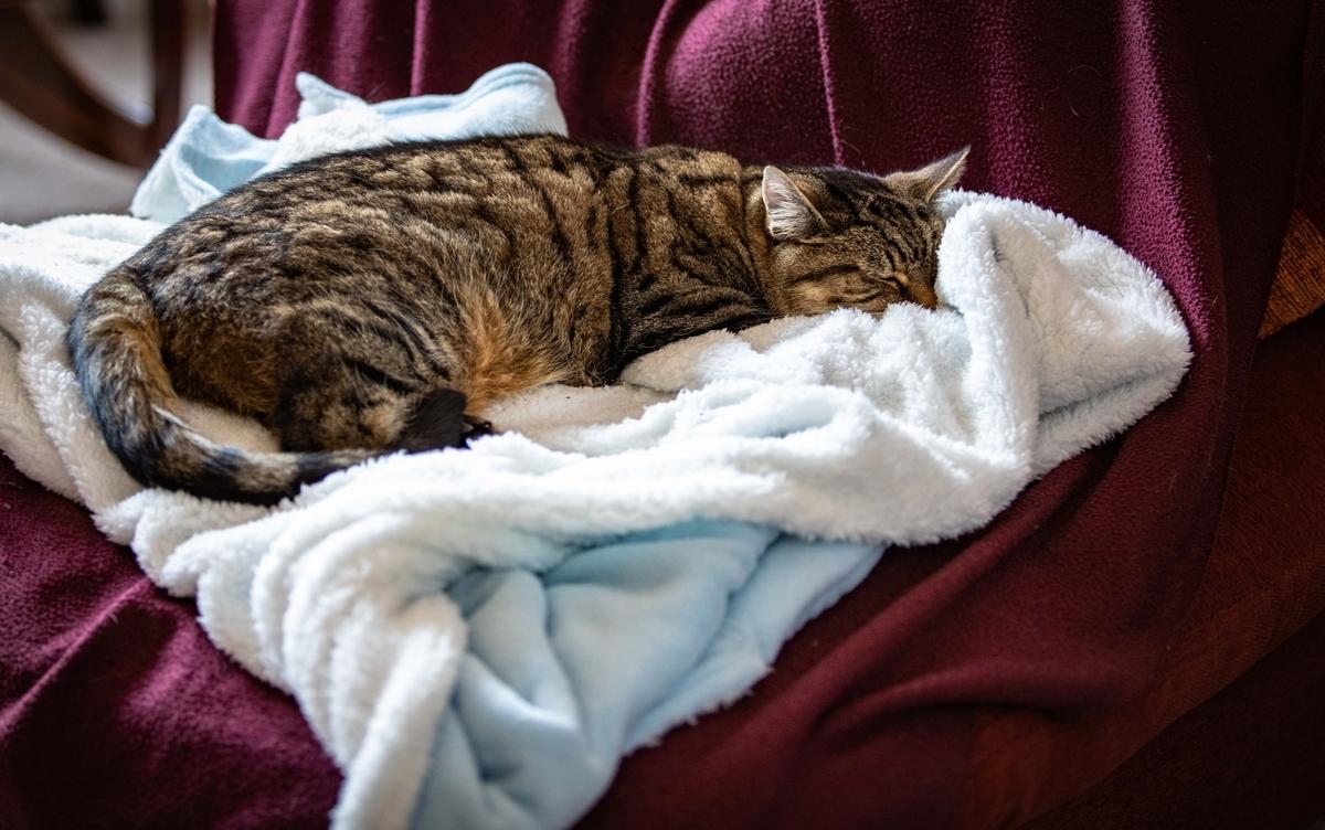 Amazonで買った毛布がQOLを上げた