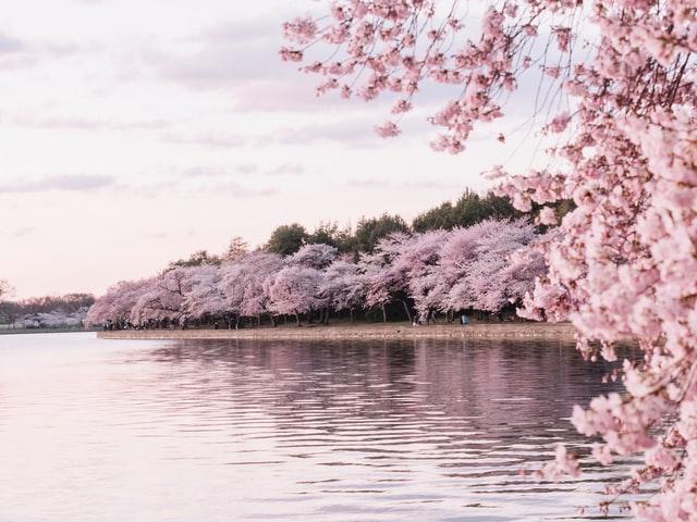 【桜花爛漫】2020年3月28日開催のMCバトル、桜花爛漫の結果をちょっとだけ
