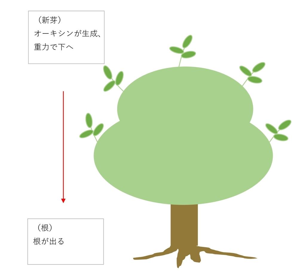 f:id:tty-kanzaki:20190214112828j:plain
