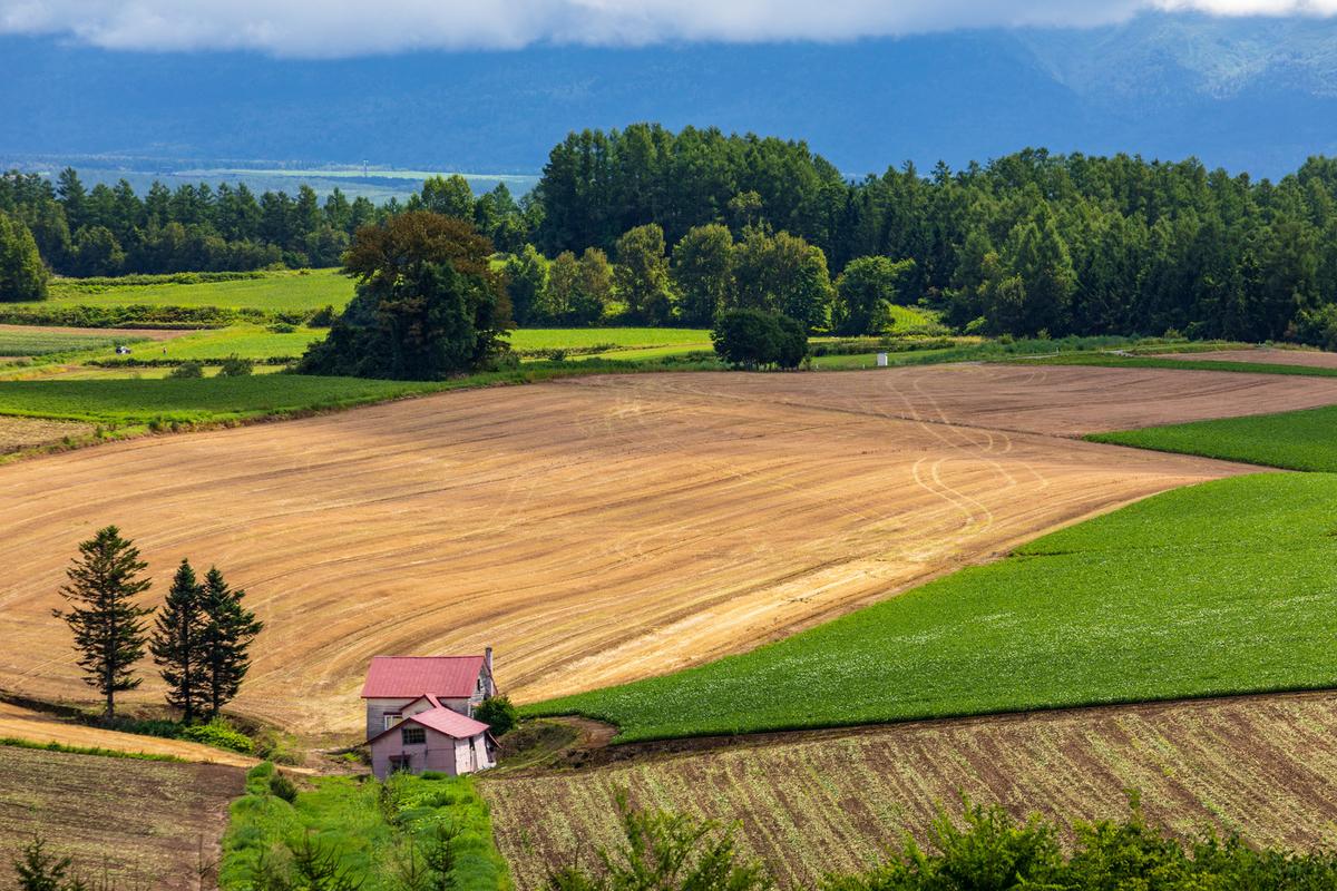広大な農地の画像