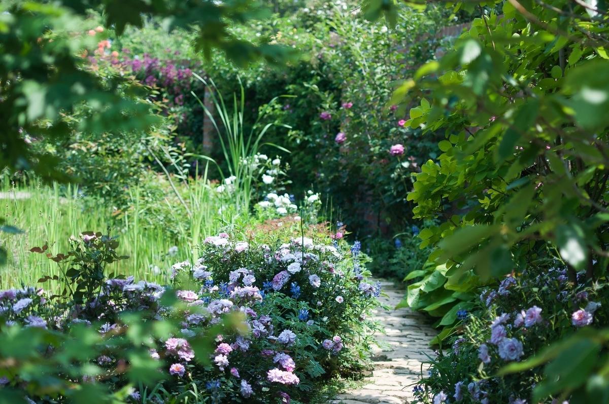 昼下がりの庭の画像