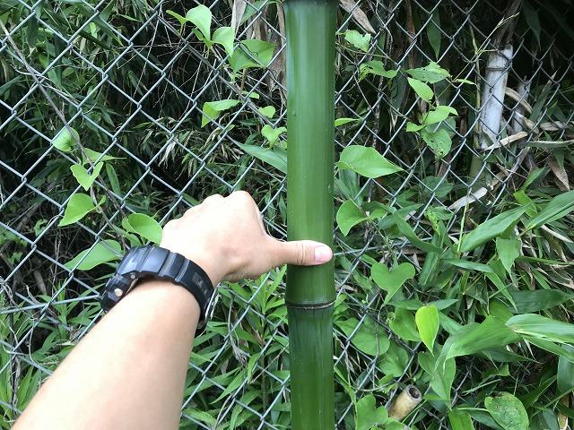 竹林の画像2