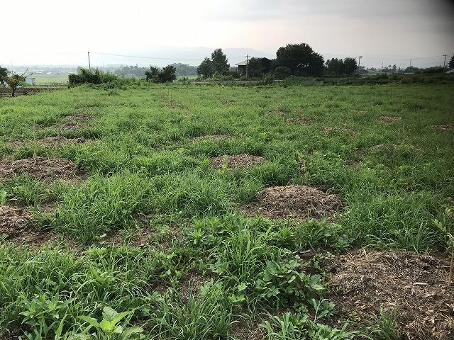 ブルーベリー畑の写真2