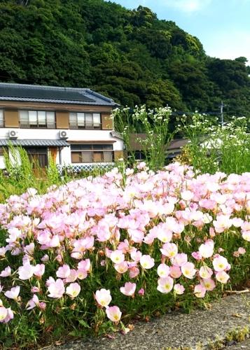 f:id:tubakinoyado:20170602080114j:image