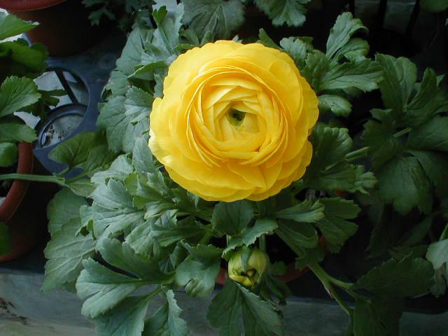 f:id:tubuyakiogata:20080218141613j:image