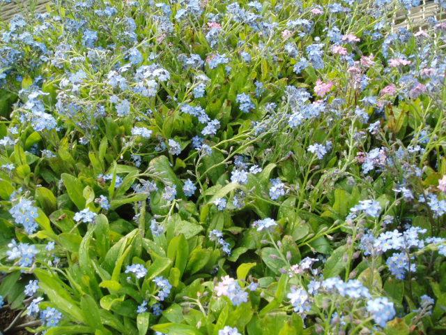 f:id:tubuyakiogata:20110604160221j:image