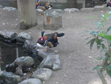 f:id:tuisumi:20110924213917j:image