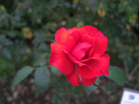 f:id:tuisumi:20111011230055j:image