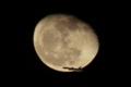 寝待ち月を横切る飛行機