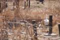 ダイサギが舞う その2 自然教育園