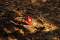 こもれびの中の落ち椿  小石川後楽園