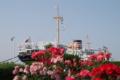 バラに浮かぶ氷川丸・山下公園