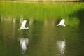 サギの追いかけっこ 小石川後楽園