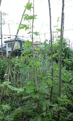 f:id:tujibee:20120721144646j:image:left