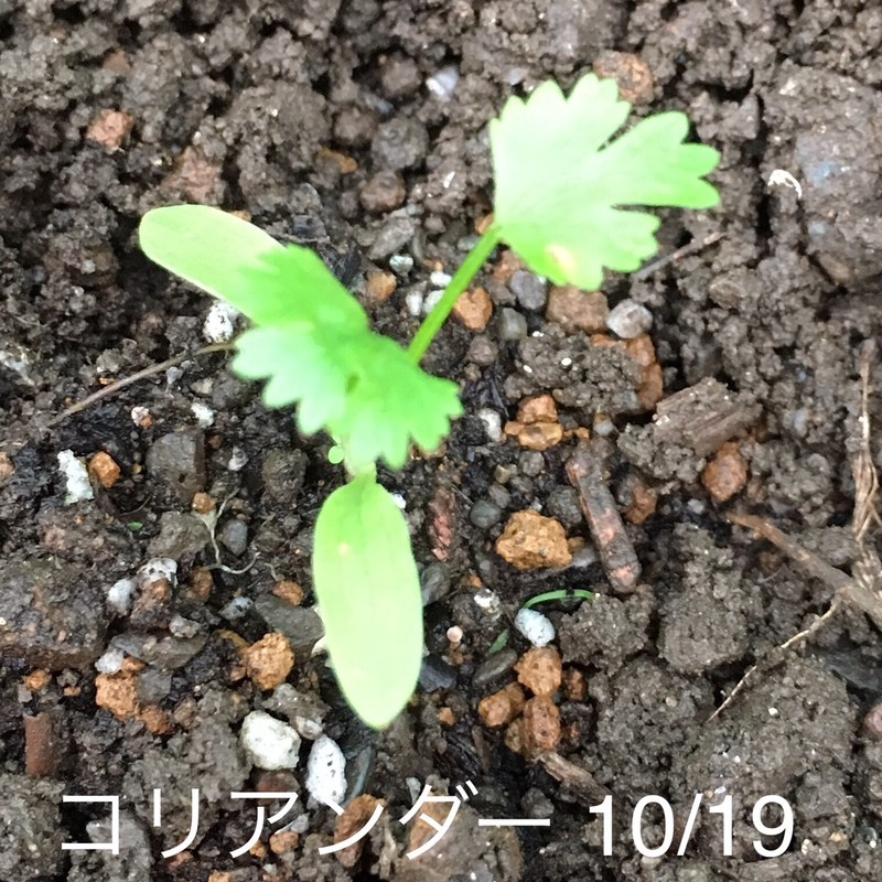 f:id:tujibee:20191019162345j:plain:w180:left
