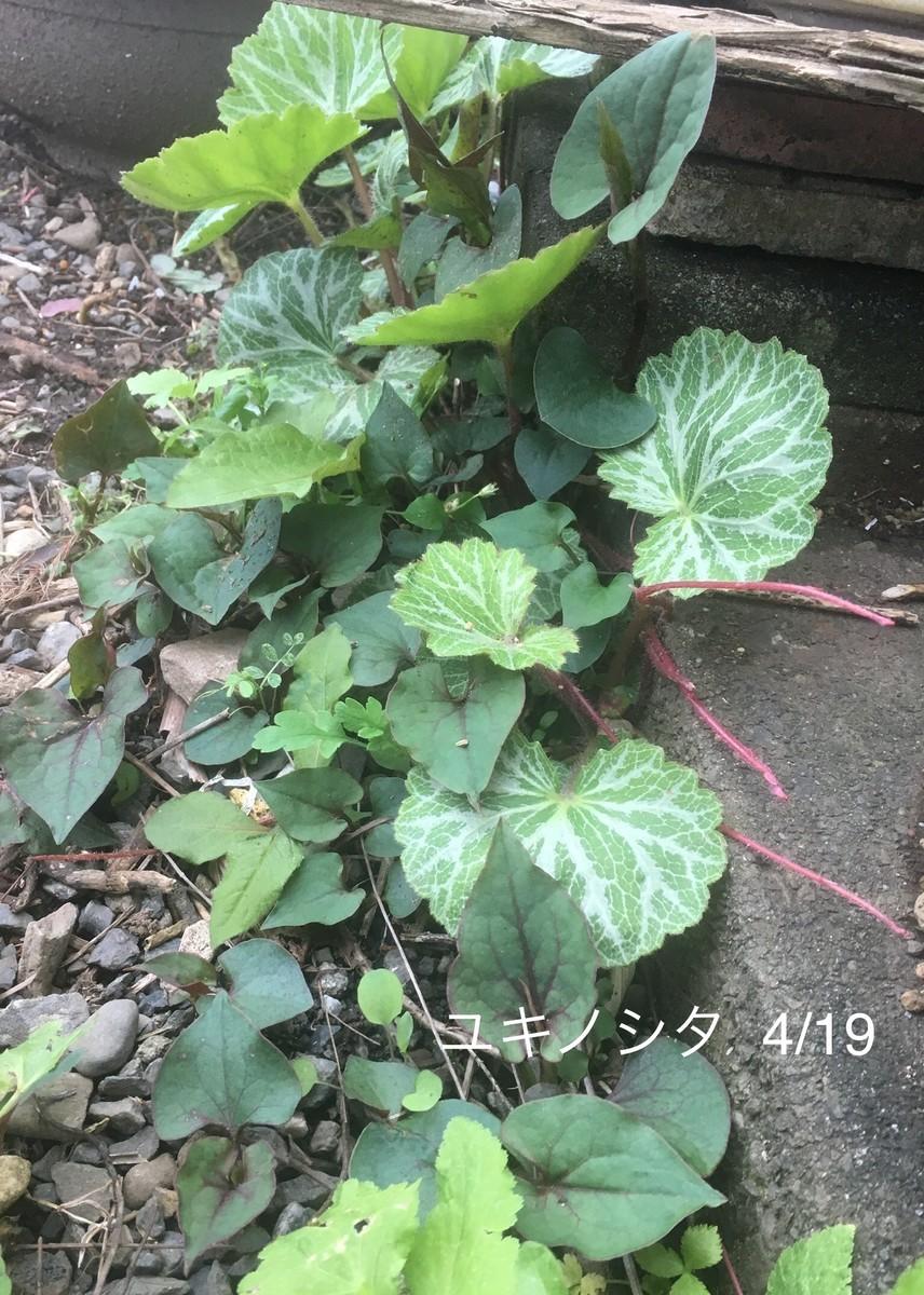 f:id:tujibee:20200419162516j:plain