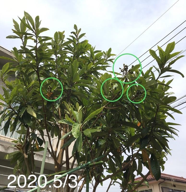 f:id:tujibee:20200503131508j:plain:w350:left