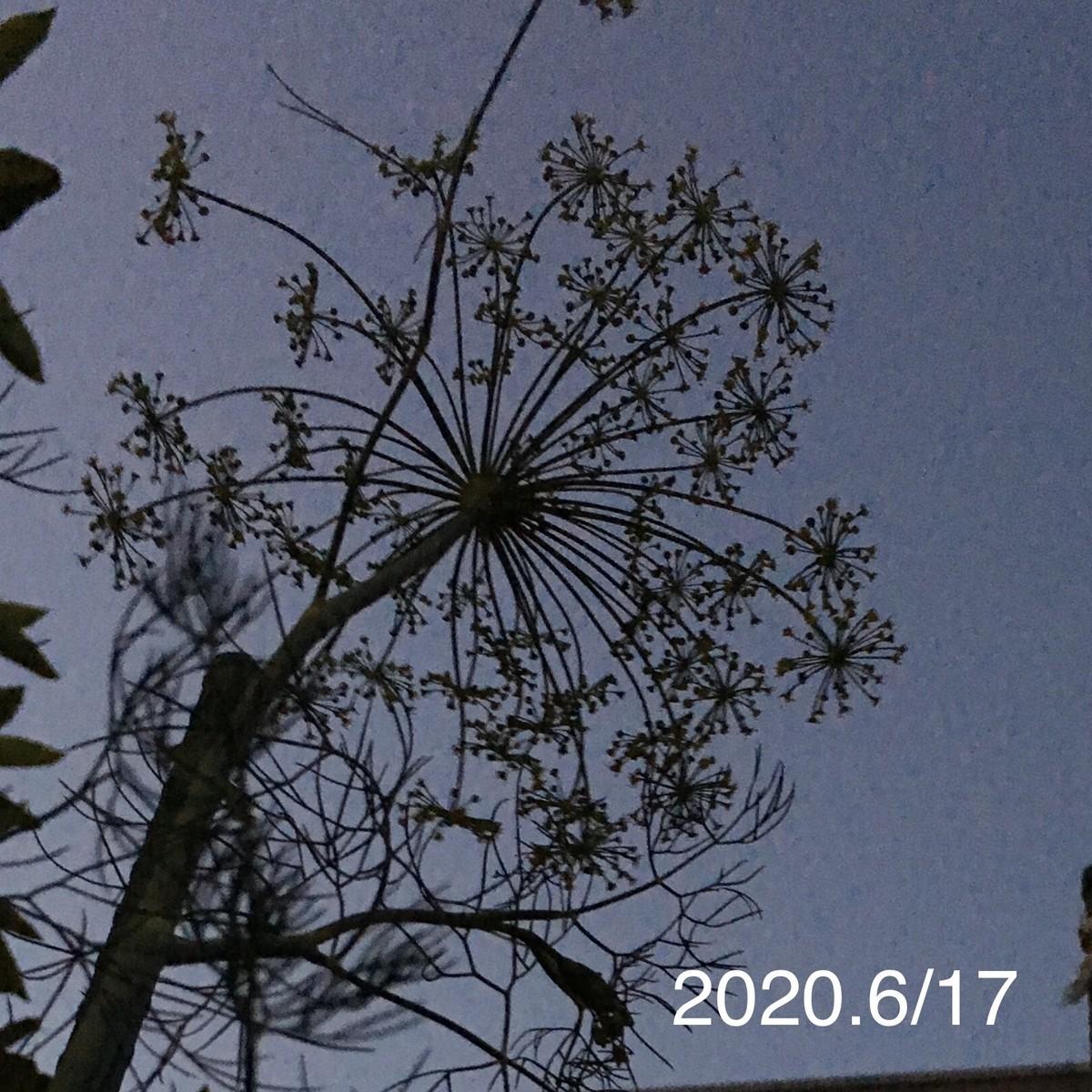 f:id:tujibee:20200617192433j:plain:w350:left