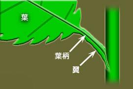 f:id:tujibee:20210517102059j:plain:w300:left