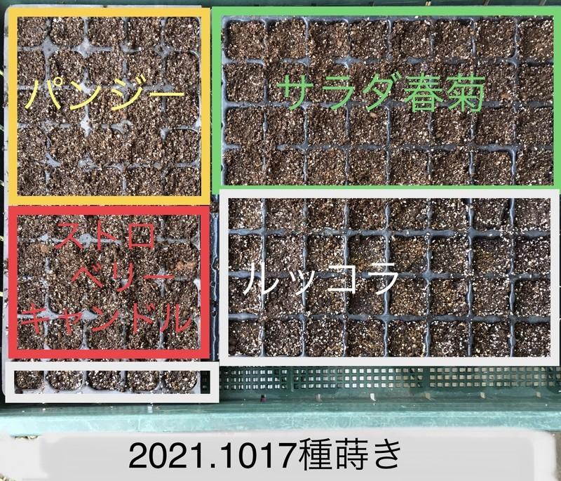 f:id:tujibee:20211017154344j:plain:w420:left