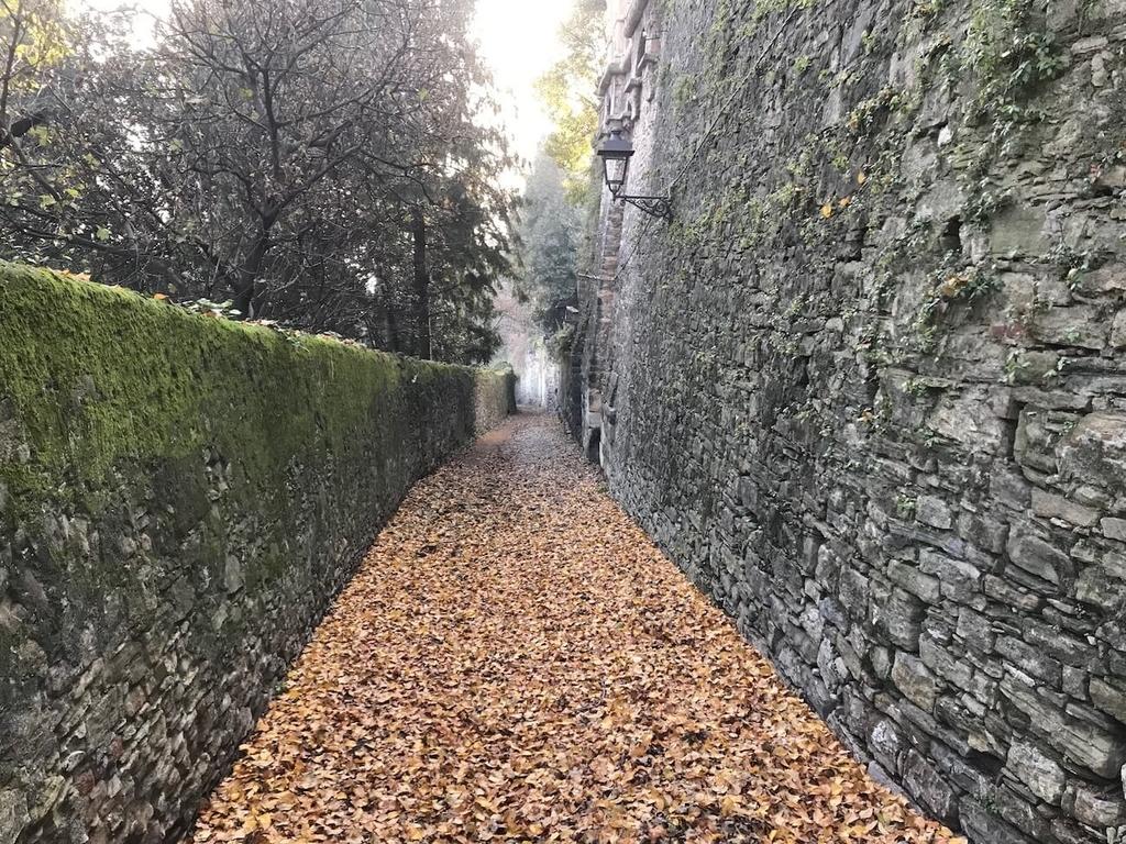 綺麗な落ち葉ロード
