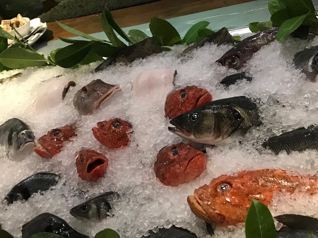 写真に取ると少しグロい魚たち