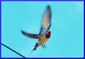 翼があっても・・・飛ぶ時は真剣なマナザシだ