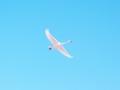 白鳥 「春に向かって、飛べ~~~っ♪」