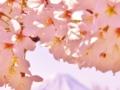 桜の向こうに富士の山