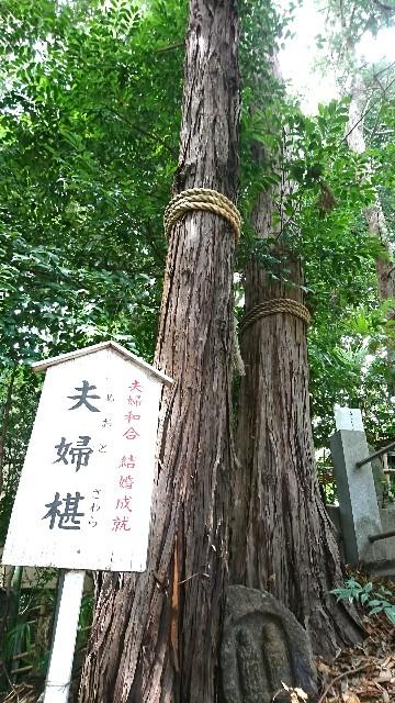 f:id:tukinorizumuyoga358:20180830163306j:image