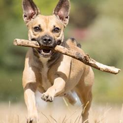 犬の中には、霊感が強い霊格が高い犬も存在する?