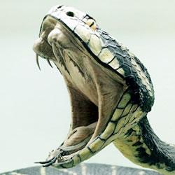 なぜ?蛇が最も霊感が強いのか