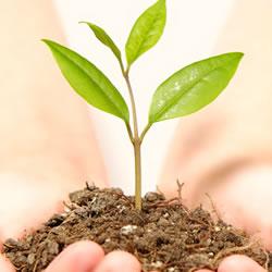 占い師になりたい!霊感と霊格の成長