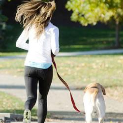 霊感の強い犬は、人間味を持つ