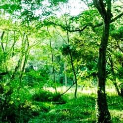 沖縄のユタ、修行場の裏話