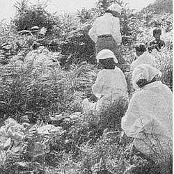 沖縄のユタとノロの違い