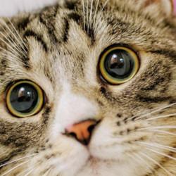 占い ネコの関係!占い好きにネコ好きが多い!?