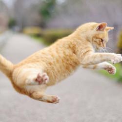 占い ネコの関係!ネコの心的エネルギー