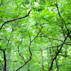 植物と霊感の関係!植物が与える霊感が強い人
