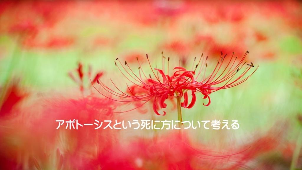 f:id:tukuyomi6200:20161222110423j:plain