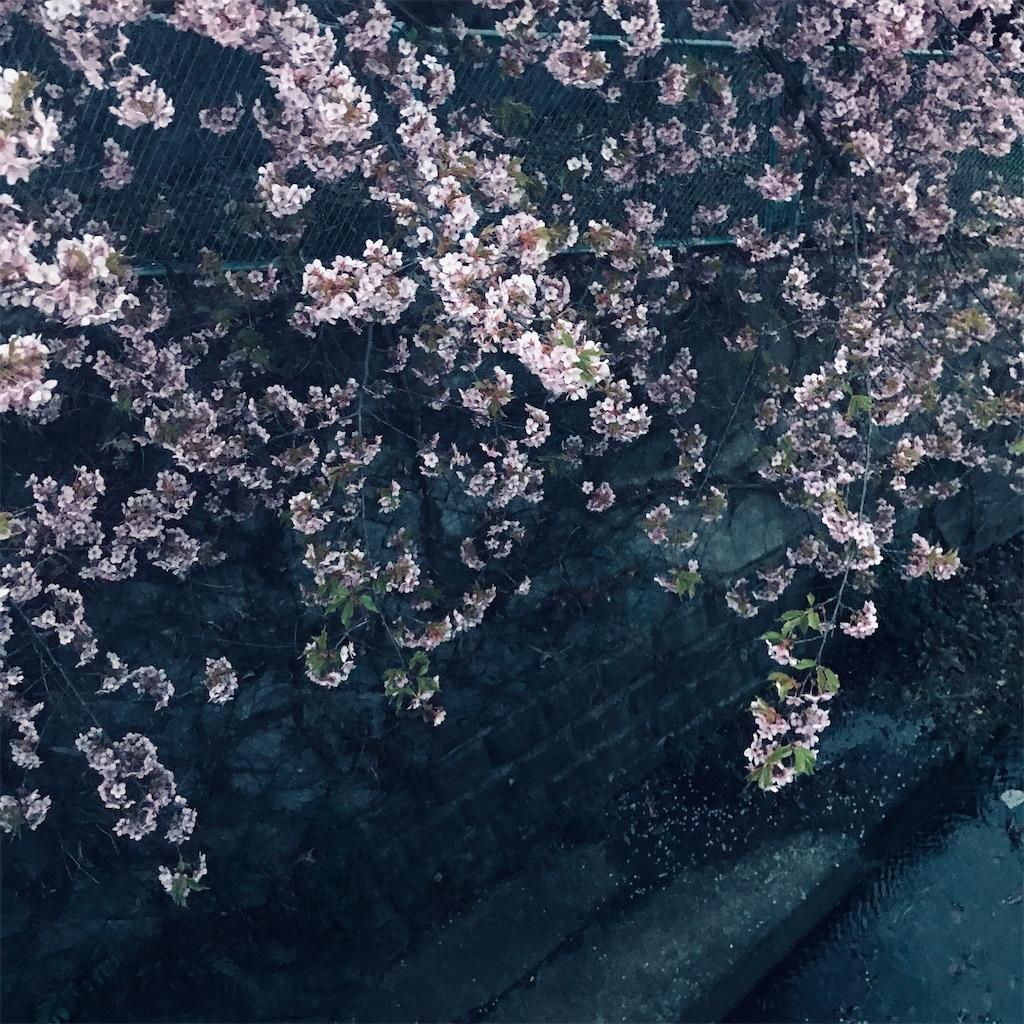 f:id:tulip-terao:20210226132820j:image