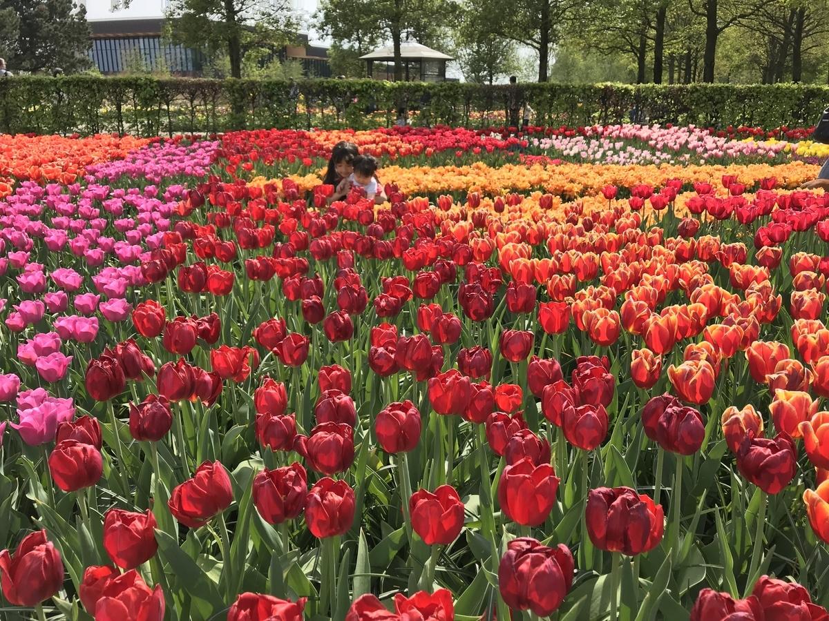 f:id:tulip_51:20190426024251j:plain